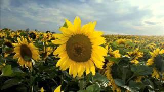 Watch Patricia Kaas Jojo video