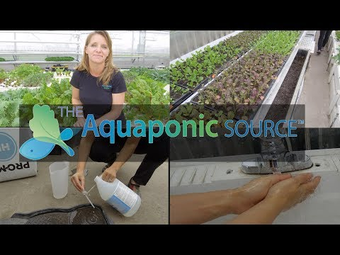 How to Prevent Bad Bacteria in your aquaponic farm
