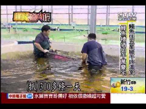 [東森新聞]水中黑金揭密! 一條龍鰻魚場衝出2.8億營收