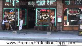 Premier Protection Dog Rock (overview)
