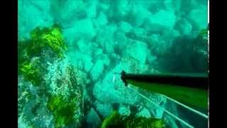 SPEARFISHING SOUTHERN BASSPOINT