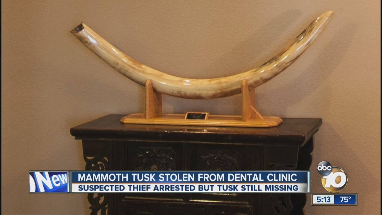 Mammoth Skyrim Tusk Mammoth Tusk Stolen From