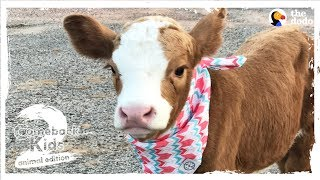 Family Brings Baby Cow Into Their Home During Hurricane | The Dodo: Comeback Kids S02E01