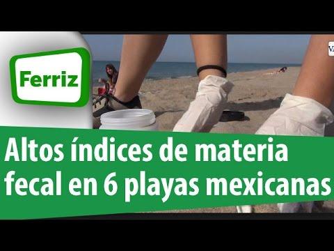 Altos índices de materia fecal en 6 playas mexicanas / Corte informativo 18 hrs 310315