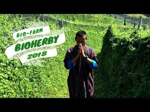 Jiaogulan Tee Blätter - von höchster Bio Qualität - PROMO VIDEO BIOHERBY.