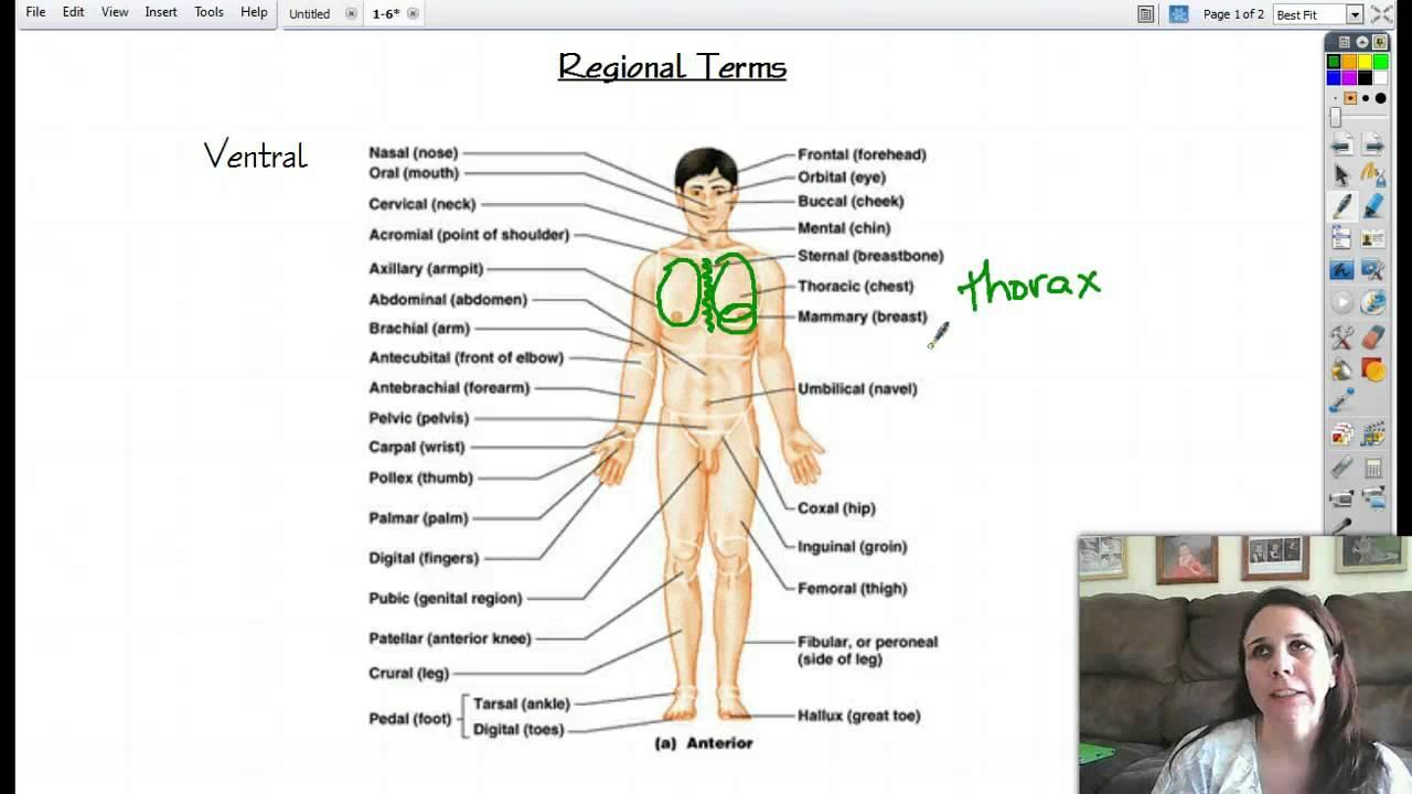 Anatomy 1-6 Regional Terms