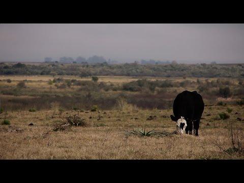 Uruguay Agrointeligente (28/3/2015) - Campo natural, divino tesoro