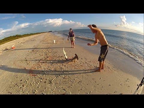 Hammerhead Shark Fishing