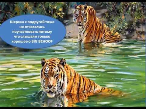 National Geographic - Смотреть онлайн документальные ...