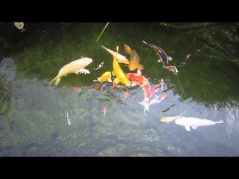 Aktuelle Teichwasser Situation am 06 09 2014