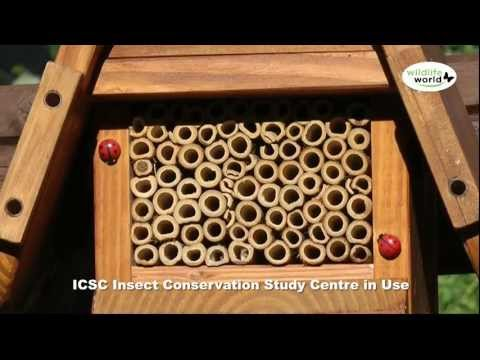 The Wildlife World ICSC Insect Conservation Study Centre Product in Use Video
