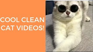 Try not to laugh cool clean cat videos