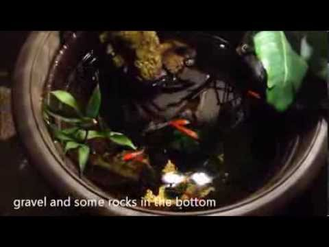 Cool DIY small Indoor Pond for less than 100$ with Goldfish