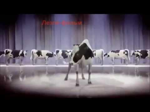 Ккалерин кьуьлер Про КОРОВ Dancing cow