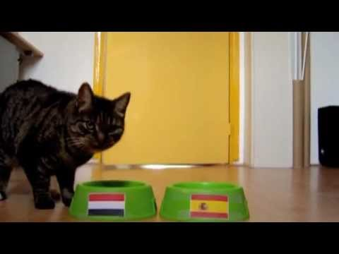 Prophecy Cat Predicts World Cup Winner Youtube