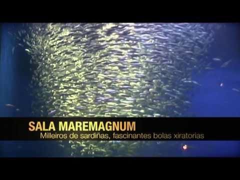 Banco de sardinas