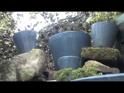 Easy Diy Water Feature For The Patio Cheap Youtube