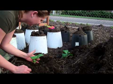 What Is All Of The Buzz About Organic Gardening? 1