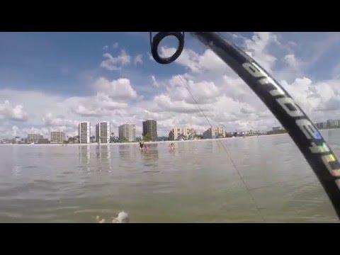 Surf Fishing Ladyfish