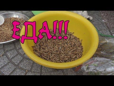 """ዦ 87 ዣ Кулинарный ужас  Азии. Вьетнамские """"деликатесы"""""""