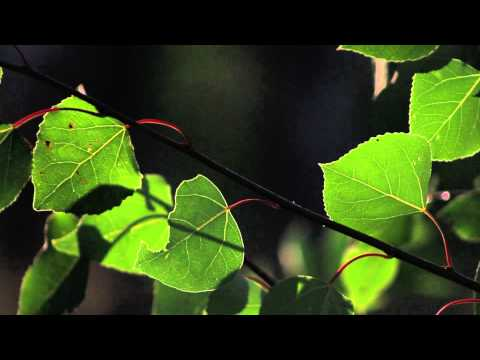 Canon 60D Tests - Noise, Rolling Shutter, Sample Footage, Low Light