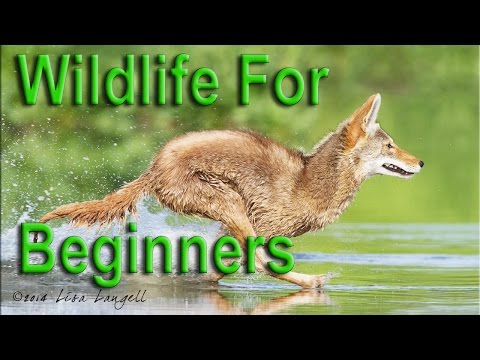After Hours:  Wildlife Photography for Beginners Episode 19