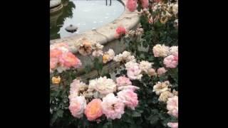 peachy - falling for u (feat. mxmtoon)