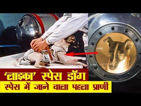 ये था स्पेस में जाने वाला पहला प्राणी | Laika Space Dog History in Hindi | first animal in space