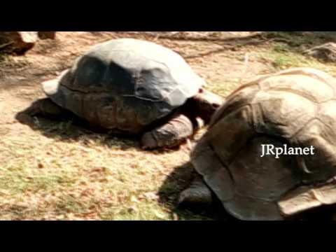World Oldest Tortoise Moving Inside Nehru Zoological park| Hyderabad | JRplanet.