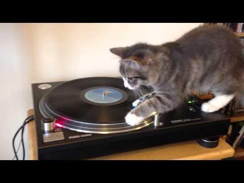 Vinyl Cat - DJ Cica
