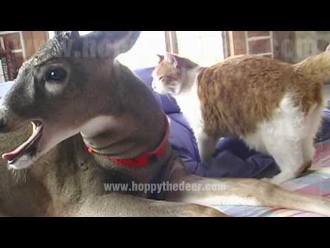 にゃんこをベロンベロンに舐めあげる鹿