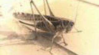 download lagu Cricket Sound gratis