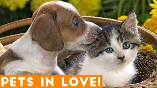 Cutest Pets in Love Compilation of 2018   Funny Pet Videos
