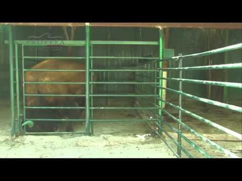 Penyelamatan satwa mengenaskan di Kebun Binatang Swasta Tehuacan Meksiko - NET5