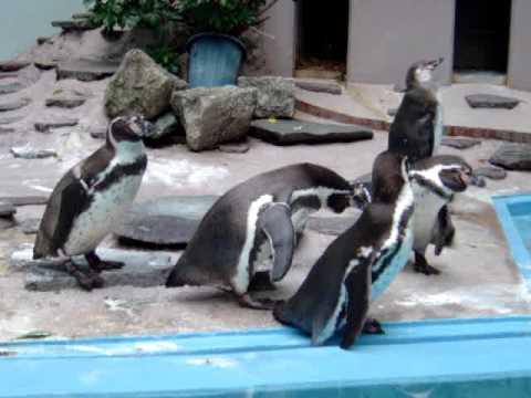 夢見ヶ崎ペンギン