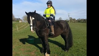 Very Sweet 14.3hh Gypsy Cob For Sale - Happy Hacker