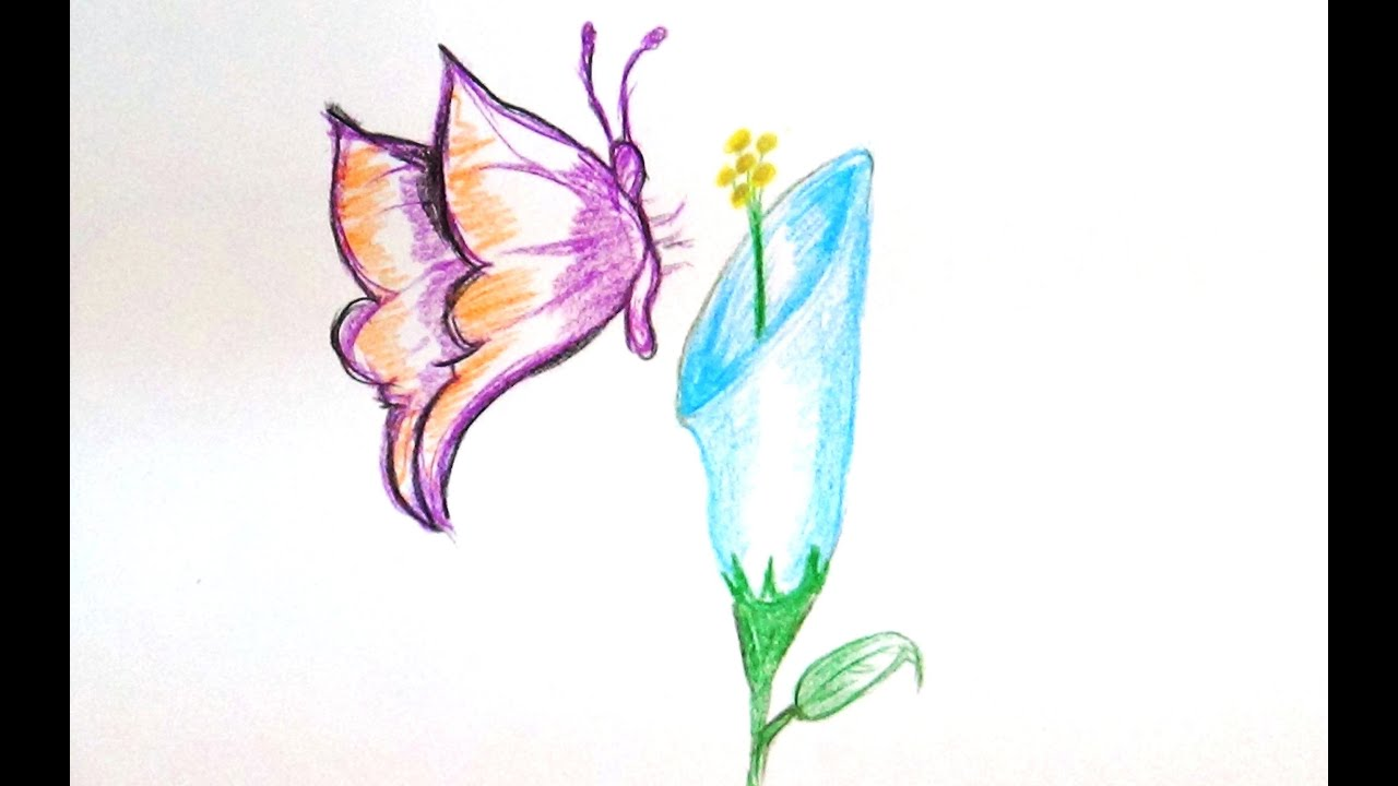 simple butterfly on a flower drawing