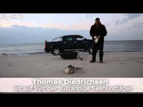 Seehundsterben ist durch Influenzavirus ausgelöst