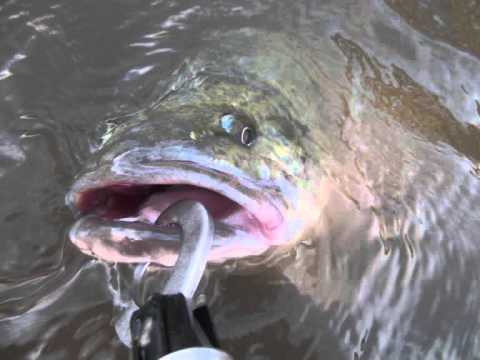 FISHING with lures  MURRAY COD