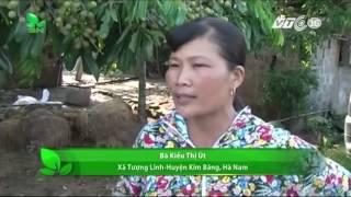 Hà Nam  Buộc dân chặt cây ăn quả, chính quyền nói gì    VNOTV