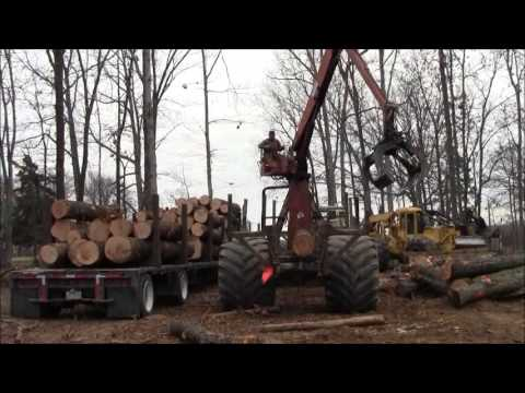 Logging In Our Timber