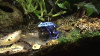 Community Dart Frog Tank. Yes, it can be done