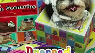 Really Good Box of Stuff - Dressed Pets