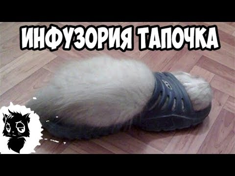 Сильные приколы с котами [Черный кот]