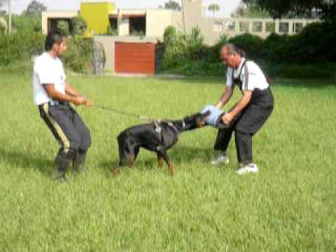 Image Result For Cesar Dog Training