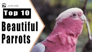 Beautiful Birds Videos - Top 10 Most Beautiful Parrots In The World