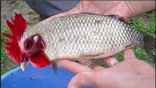 Sinh vật lạ mình cá, đầu gà gây sốt mạng xã hội