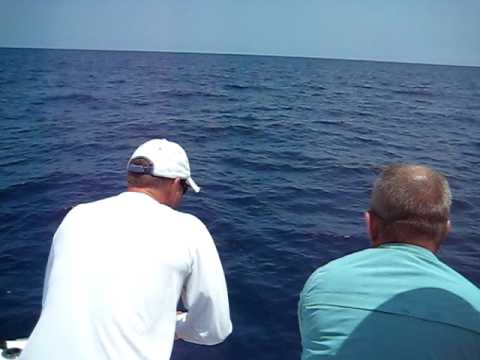 Sarasota Fishing Offshore