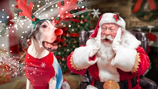 Great Dane Surprised with new family! 🎅🐶Santa helps Goliath the dog get adopted! -As seen @The Dodo