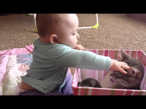 Funny Videos 2014 - Funny Cats Video - Funny Cat Videos Ever - Funny Animals Funny Fails 2014 video